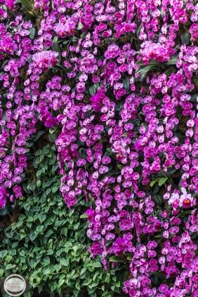 orchids-10-Edit-2