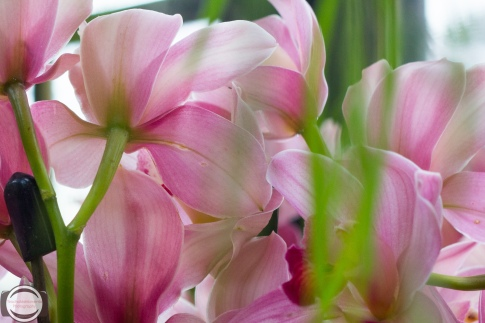 orchids-29