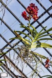 orchids-71